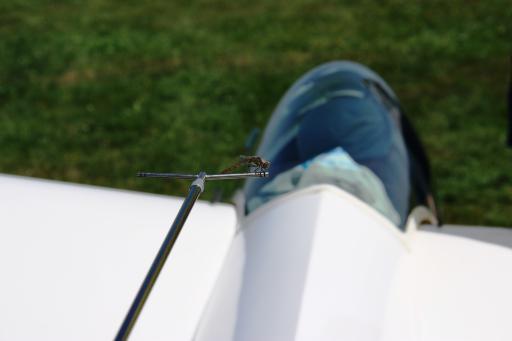 64  Libelle on Libelle