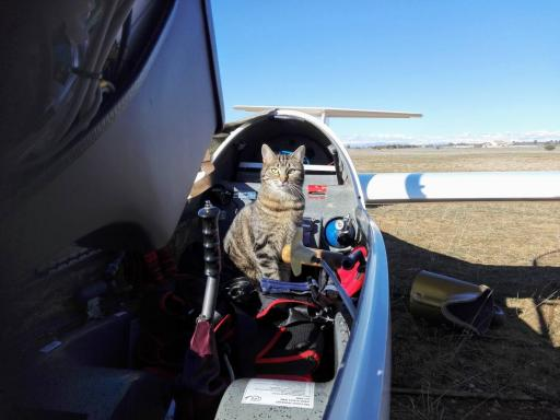 040  Preflight checklist done properly  The LS6 is declared mice free
